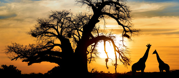 African Honeymoon - The Most Perfect Romance Destinations In Life
