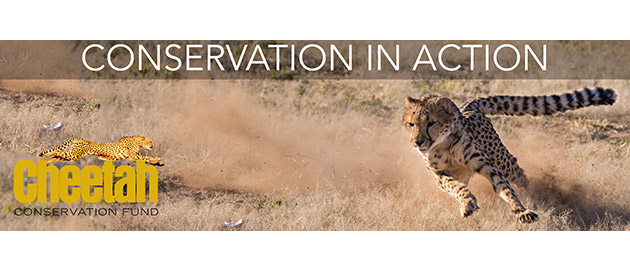 THE CHEETAH CONSERVATION FUND